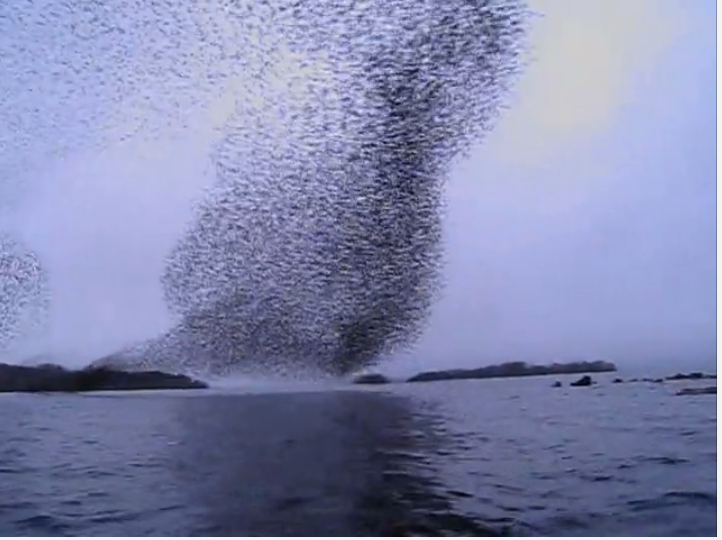#SocialMedia #Murmuration: The Art of Transcending the Mundane