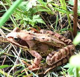 When mowing long grass be mindful of the frogs!!