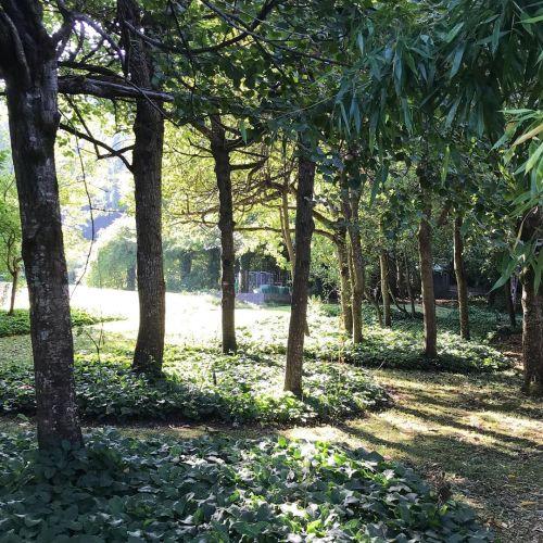 The garden always looks so fabulous when it's sunny. Dappled…