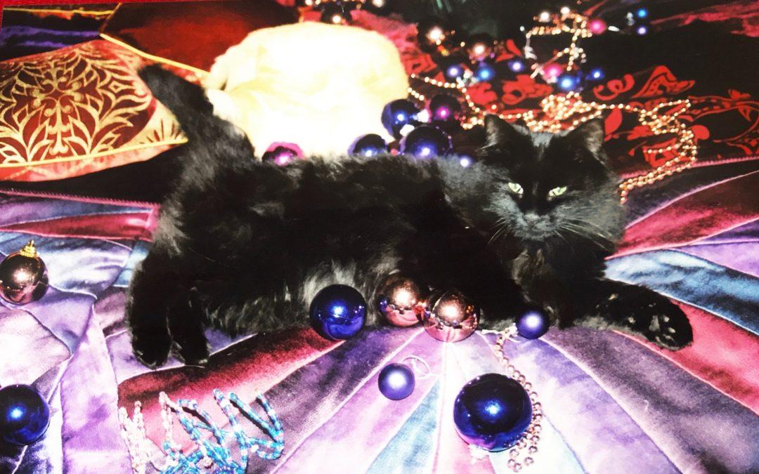 christmas cat belle, luxury silk velvet cat